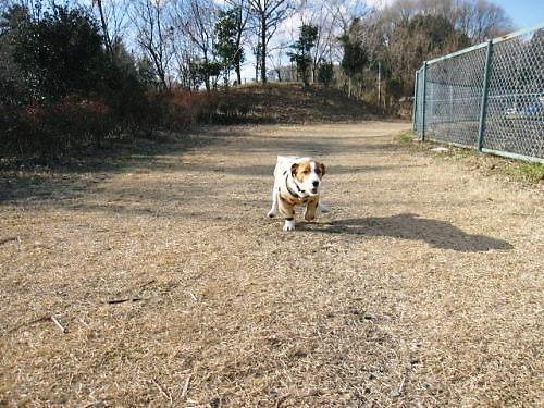 10長岡公園024