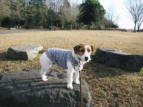 2011長岡公園029