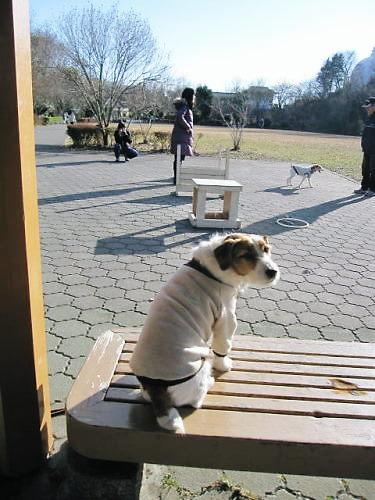 2011長岡公園035