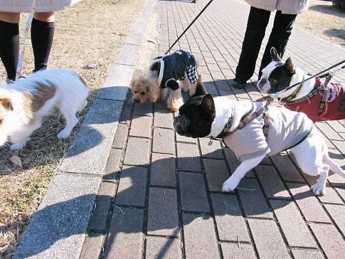 2011長岡公園042