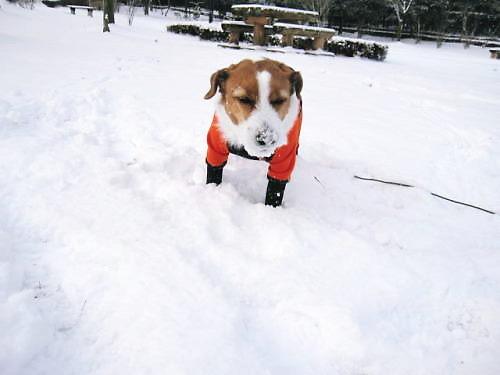 2011長岡公園045