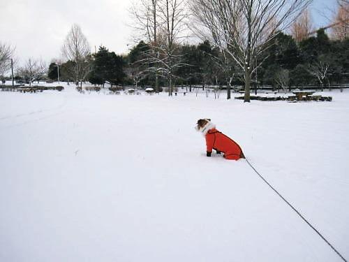 2011長岡公園051