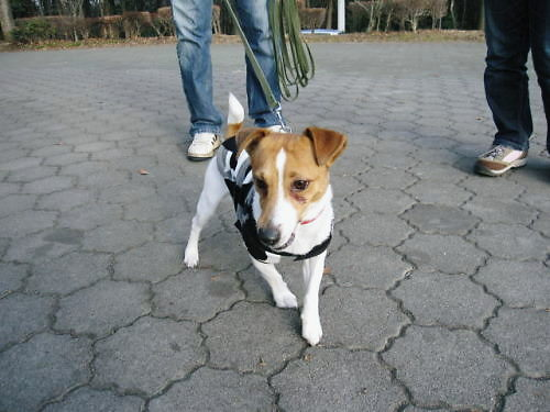 2011長岡公園091