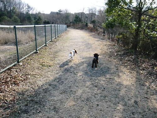 2011長岡公園095