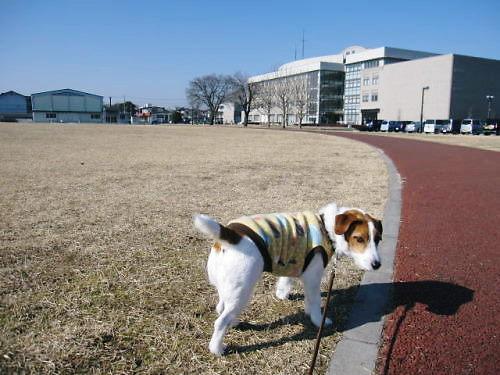 2011お散歩001