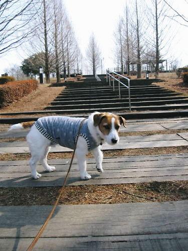 2011長岡公園111