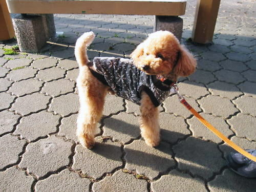 2011長岡公園115