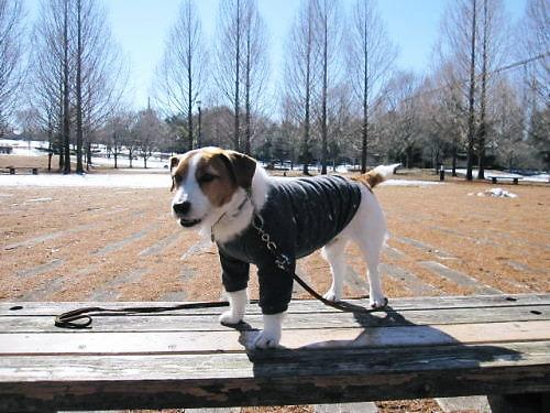 2011長岡公園127