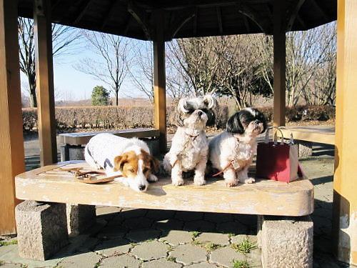 2011長岡公園133