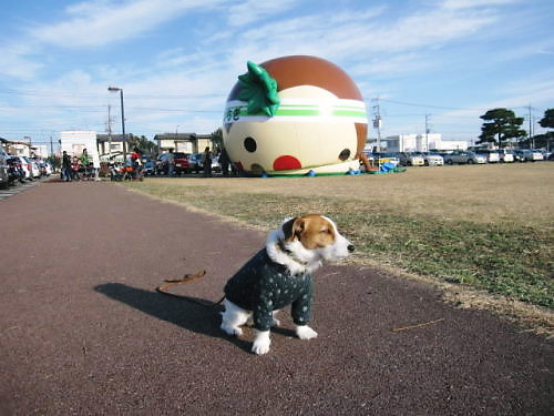 2011お散歩011