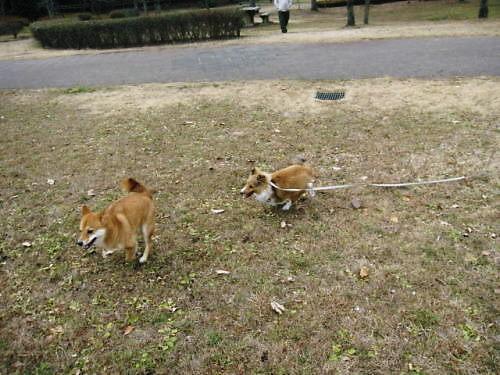 2011長岡公園965