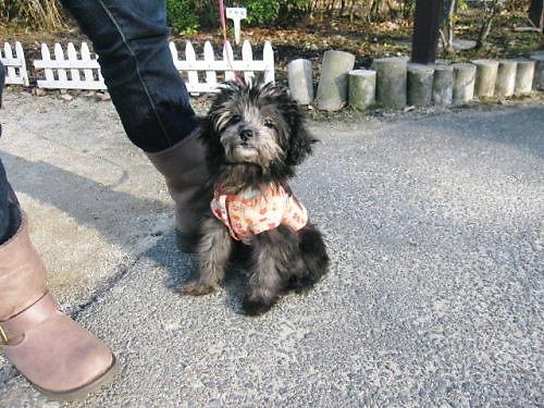 2011おでかけ611