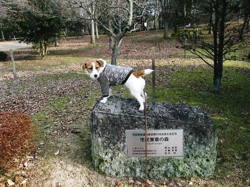 2012長岡公園036