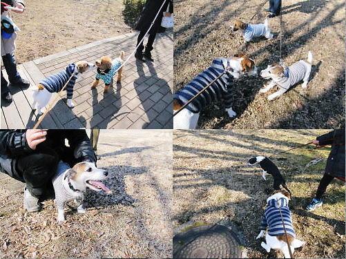2012長岡公園071