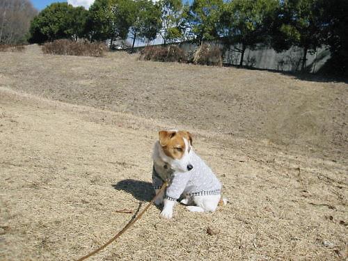 2012長岡公園098