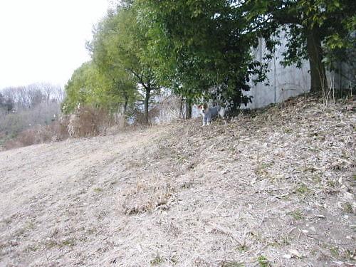 2012長岡公園113