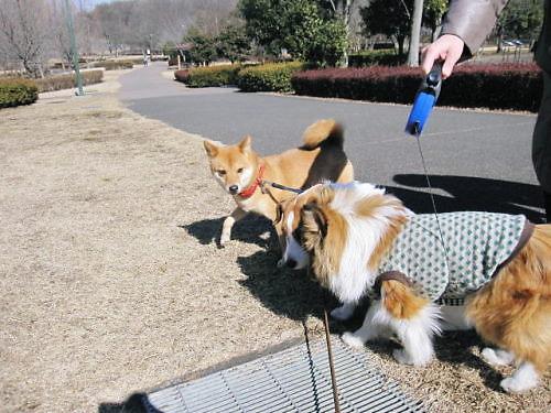 2012長岡公園125