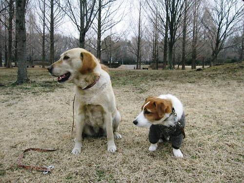 2012長岡公園184
