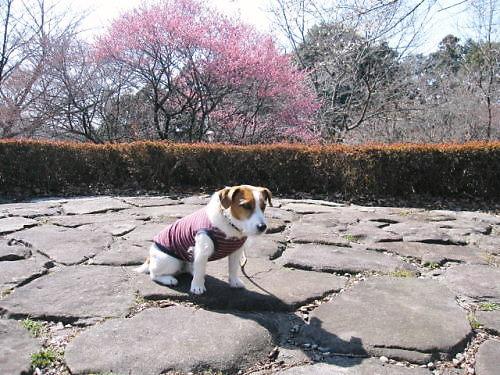 2012長岡公園199