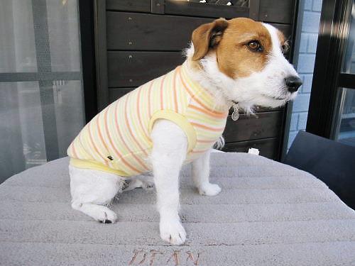 2012犬服001