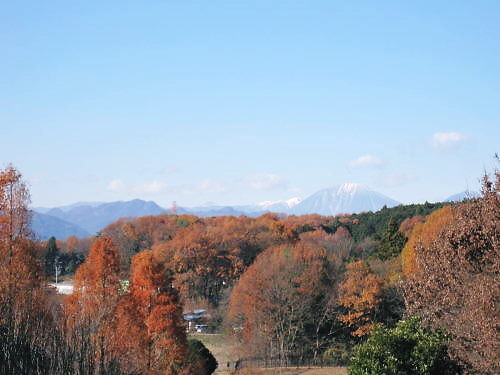 2011草木花053