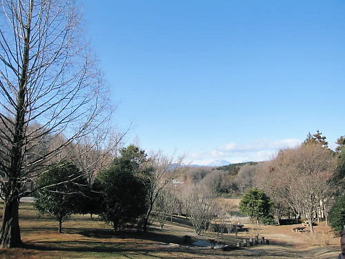 2012草花木002