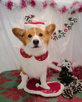 2009クリスマスショット(1)