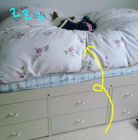 ベッド飛び乗り