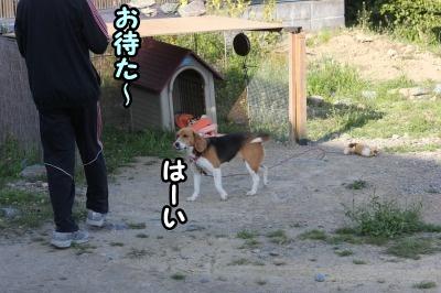 さあ散歩へ