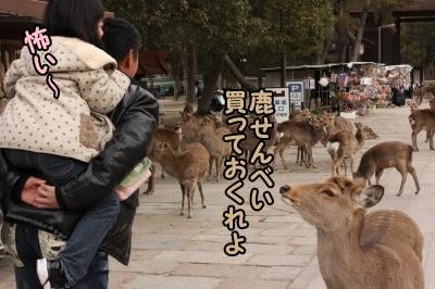 鹿いっぱい2