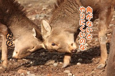ケン鹿(カ)3