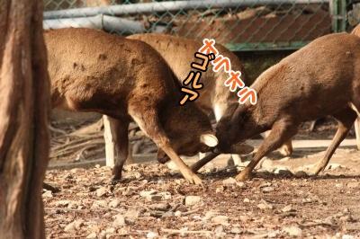 ケン鹿(カ)2