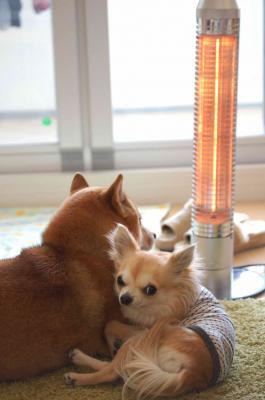 お家の中は暖かいね☆