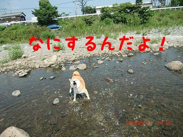 moblog_3f61aa97.jpg