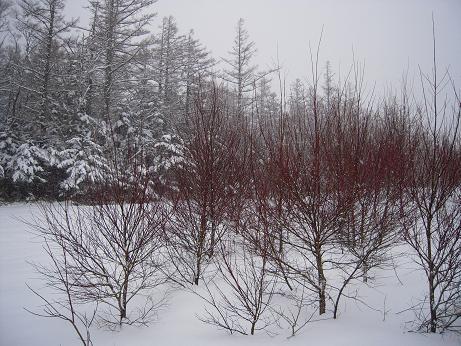 冬の上高地 081