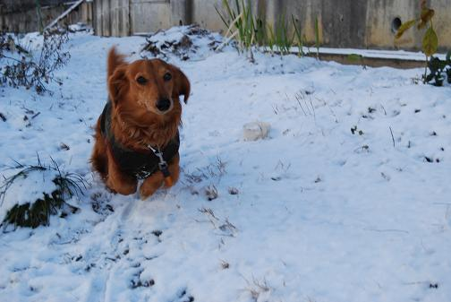 2011.01雪遊び 0071