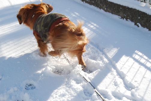 2011.01雪遊び 0041