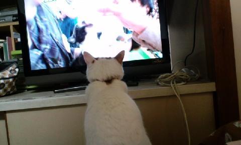 TV大好き