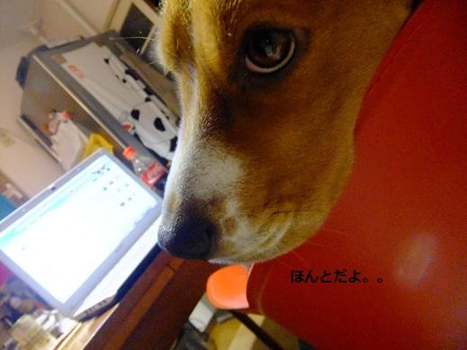 010_20110330003446.jpg