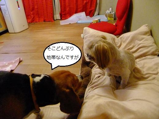 141_20110418003920.jpg