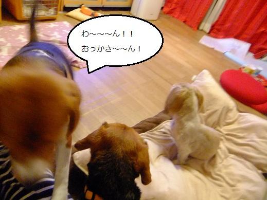 148_20110418005803.jpg
