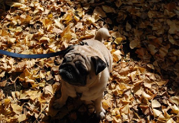 落ち葉とチッチくん。