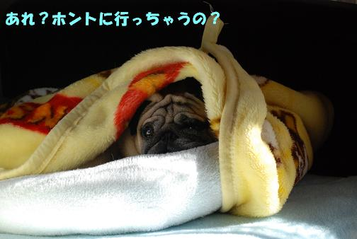 お出かけなら起こしてよ!