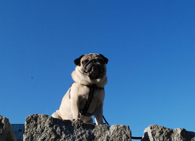 石でできたオブジェに乗ってみた。