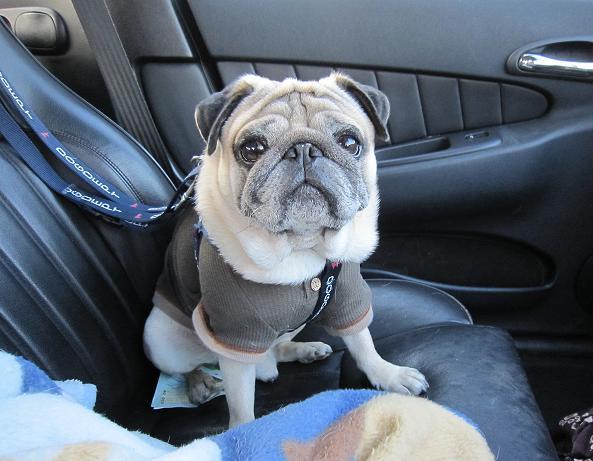 車の中で、チッチくんをパチリ。
