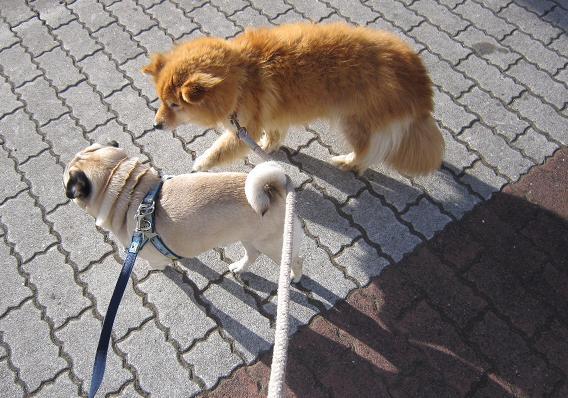 お散歩中、何か話しているのかな?