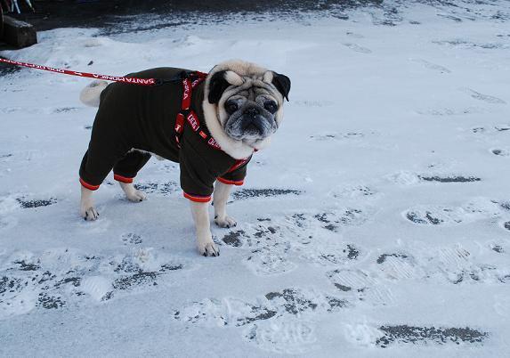 さて、チッチはどこの雪の上にいるのでしょう~?