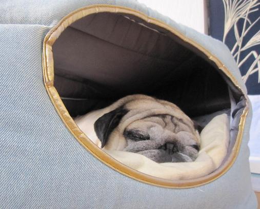今このベッドがチッチのお気に入り
