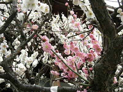 houjyuji_100308_3.jpg