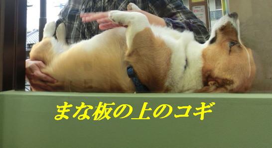 CIMG4667_20111017230636.jpg